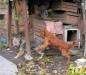 Домашние животные Кишинев Молдова