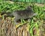 Кошки Кишинев