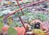 Собака кушает виноград Молдова