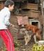 Пацан разнимает трахающихся собак