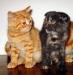 Пародисты котята Италия