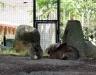 Био парк Италия зайцы