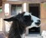 Животные зоопарк Италия