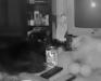 Домашние животные италия кошки