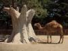 Верблюды в Италии