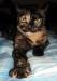 Хищная итальянская кошка