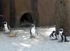 parco zoom cumiana pinguini