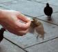 Птицы в Италии