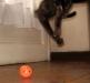 Играющая кошка
