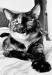 Наглая итальянская кошка