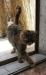 Породистые кошки в итальянских условиях