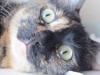 Коты кошки Италия
