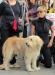 центр защиты прав животных на западе Италия