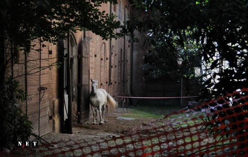 Cavallerizza Reale - Исчезающие достопримечательности Турина королевская конюшня