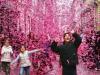 Салют из розовых листочков