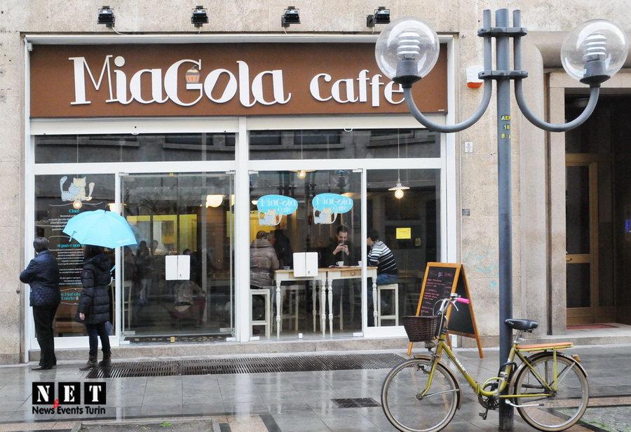 КотоКафе в Турине, первое в Италии - MiaGola Сafe Torino