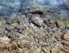 Каменистый берег Сан Ремо