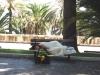 Спящая красавица в парке Сан Ремо