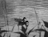 Утки на реке По в Турине