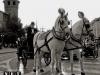 torino carozza con i cavalli piazza Castello