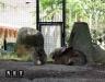 Zoom Cumiana Torino кролики