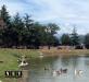 Zoom Cumiana Torino lago le anatre