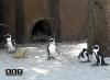 Bioparco Zoom Cumiana Torino pinguini