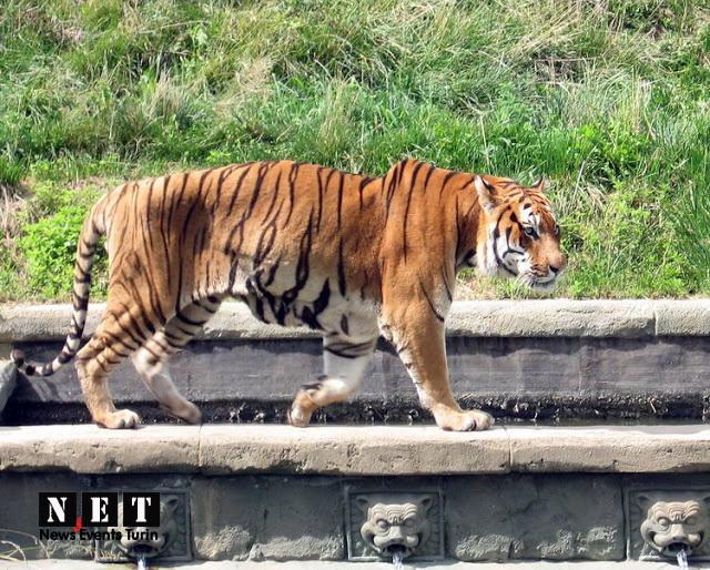 Зоопарк Турина для похода с детьми