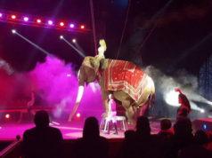 Цирк в Турине Италия это масса удовольствия