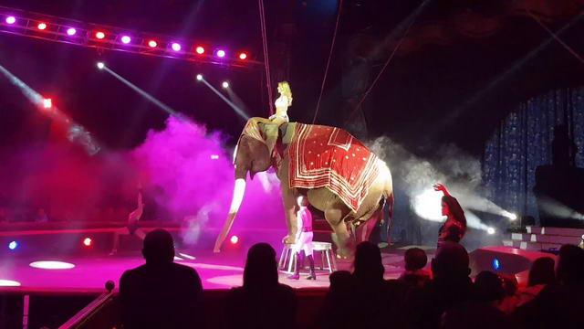 Смотреть итальянский цирк в Турине — Видео.