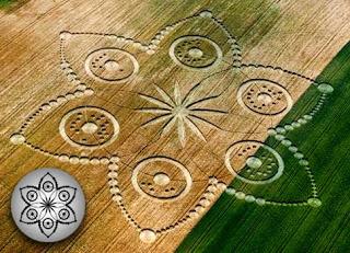 Магия на полях пшеницы Турин