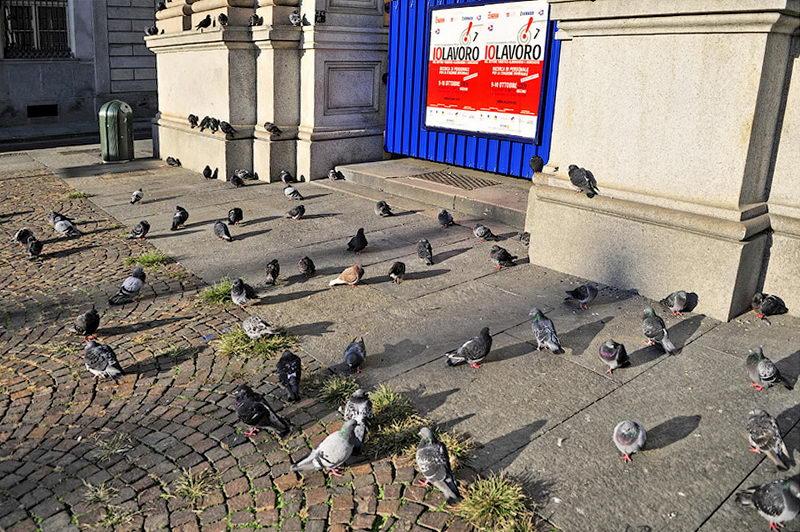 Турин рано утром голуби на площади