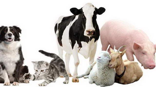 Домашние животные в Италии в Турине и не только