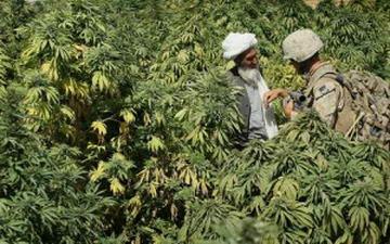 Легализация марихуаны во всем мире