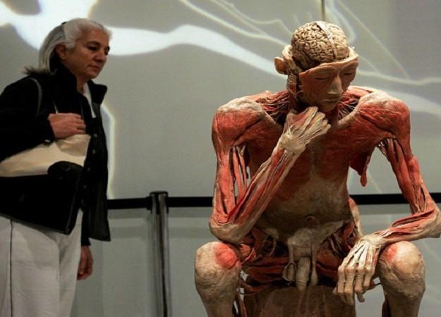 Турин выставка человеческого тела