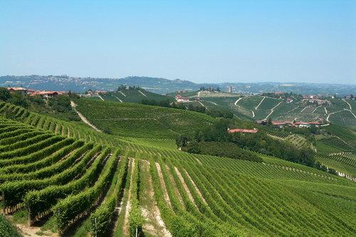 Ланге и Монферато лучшие вина Италии Пьемонта