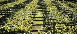 Дегустации вина и винные туры Пьемонт