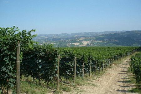 Виноградные угодия в Пьемонте знаменитые Ланге и Монферато