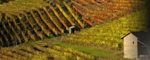 Дегустация вина Пьемонте Бароло