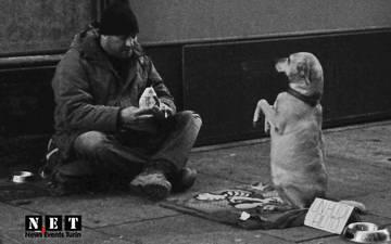 Человек и собака на улице Турина Италия