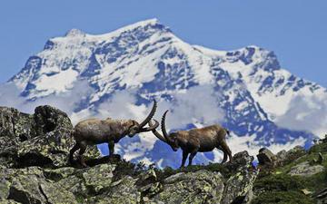 Национальный парк Италии Gran Paradiso