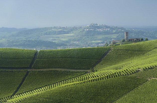 Замечательные винные ландшафты Пьемонта Винные пейзажи Пьемонта