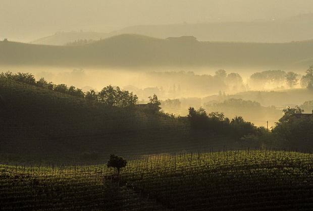 Почему вина Пьемонта такие богатые вкусовыми качествами Винные пейзажи Пьемонта