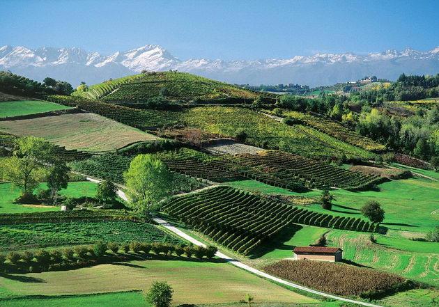 Винные пейзажи Пьемонта