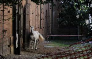 Cavallerizza Reale - Исчезающие достопримечательности Турина.