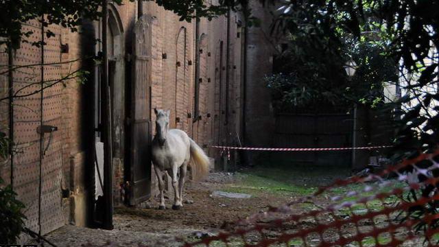 Королевские конюшни Турин хотят продать под строительство торгового центра