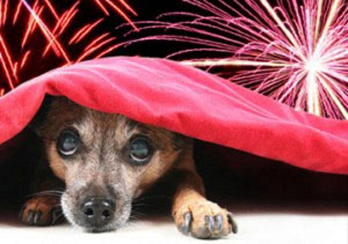 Турин запрет на взрывы и салюты на Новый год