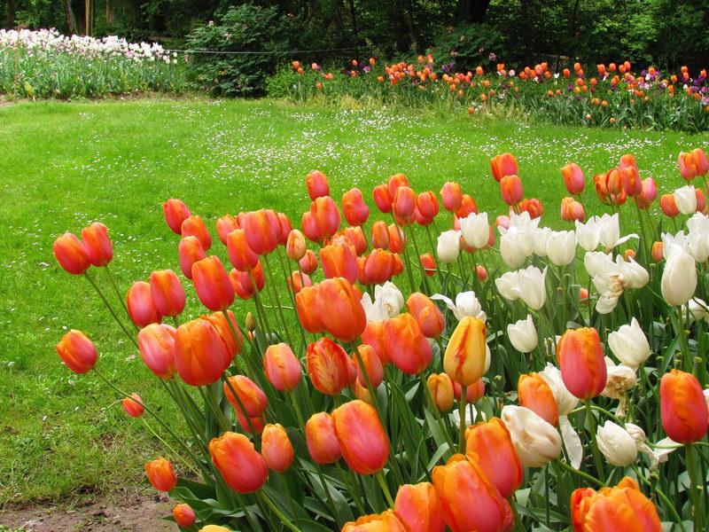 Тюльпаны в Италии, фестиваль цветов в замках Пьемонта Pralormo