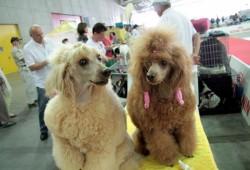 Выставка собак в Турине