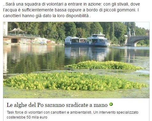 Реку По в Турине заполонили заросли